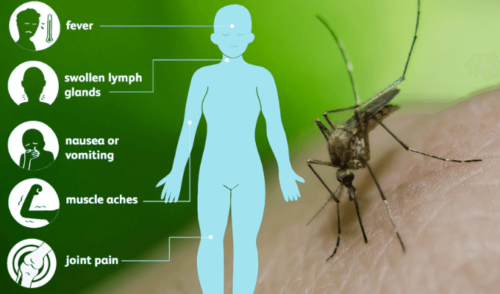 West Nile Virus: Symptom, Treatment & Prevention