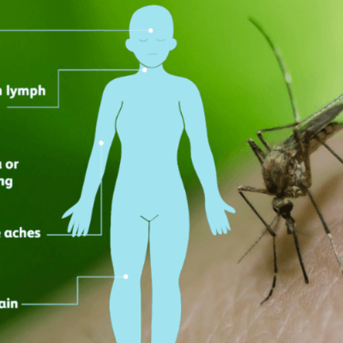 West Nile Virus: Symptoms, Treatment & Prevention