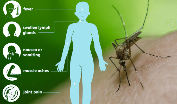 Image of a Man and Mosquito with the List of West Nile Virus Symptoms